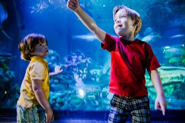 2 children standing in front of aquarium