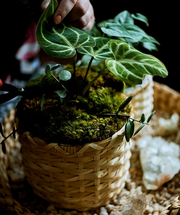 A plant in a bamboo pot on a tray.