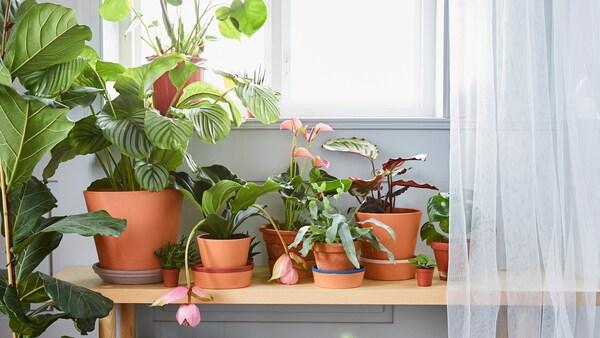 Storie per imparare a curare le piante d'appartamento.