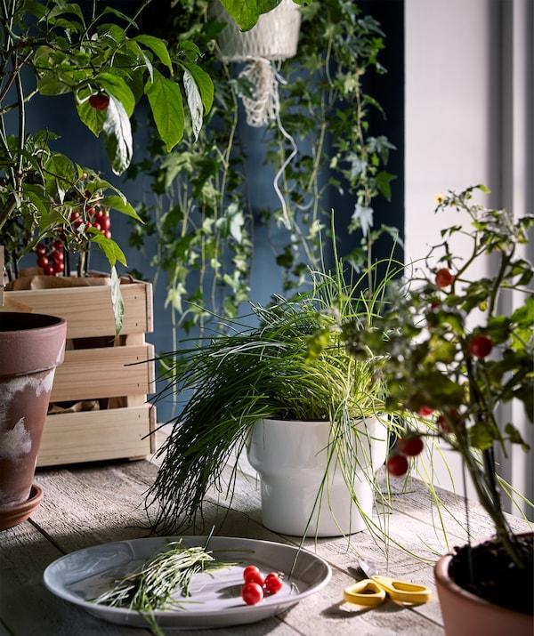 Столешница из необработанного дерева в помещении, похожем на кухню. Стол заставлен растениями, а по центру стоит тарелка со свежим урожаем зелени.