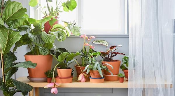 Hyödyllistä tietoa, jolla pääset alkuun kasviharrastuksessasi.