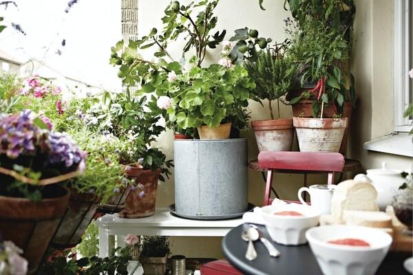 -50% sur les plantes naturelles