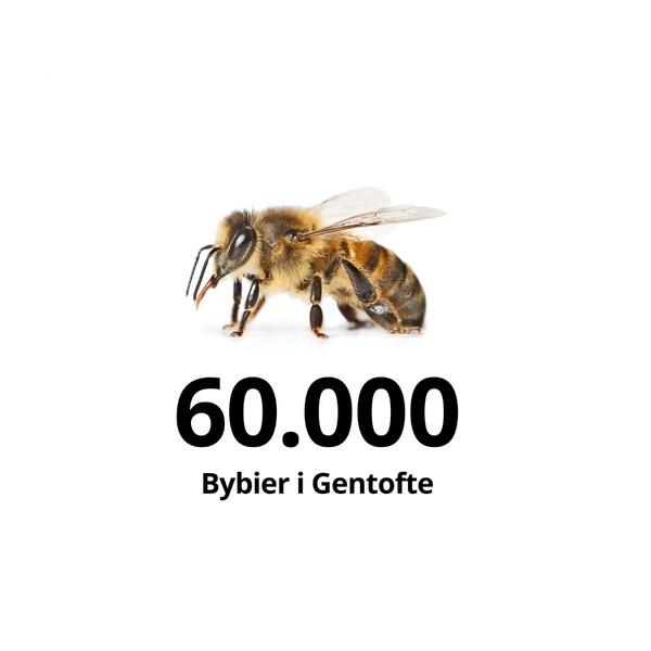 60.000 Bybier i Gentofte