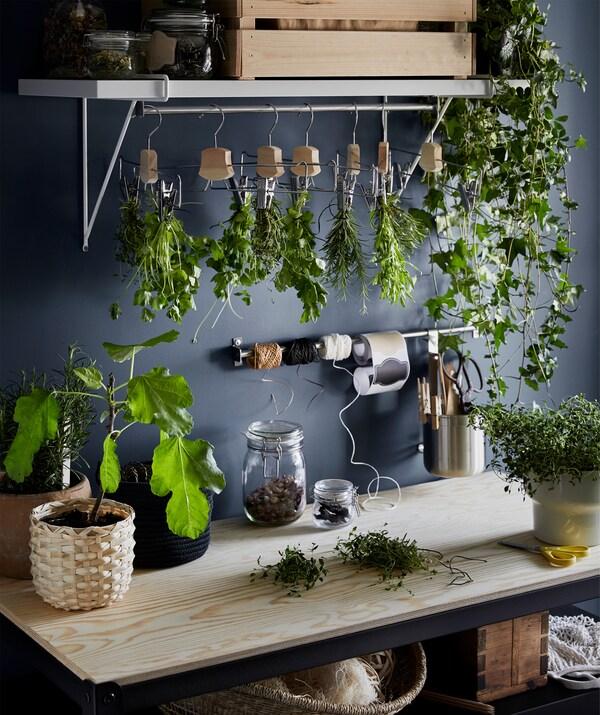 На деревянной столешнице расставлены горшки со свежими травами. Пучки подсыхающей зелени подвешены на плечики для одежды.