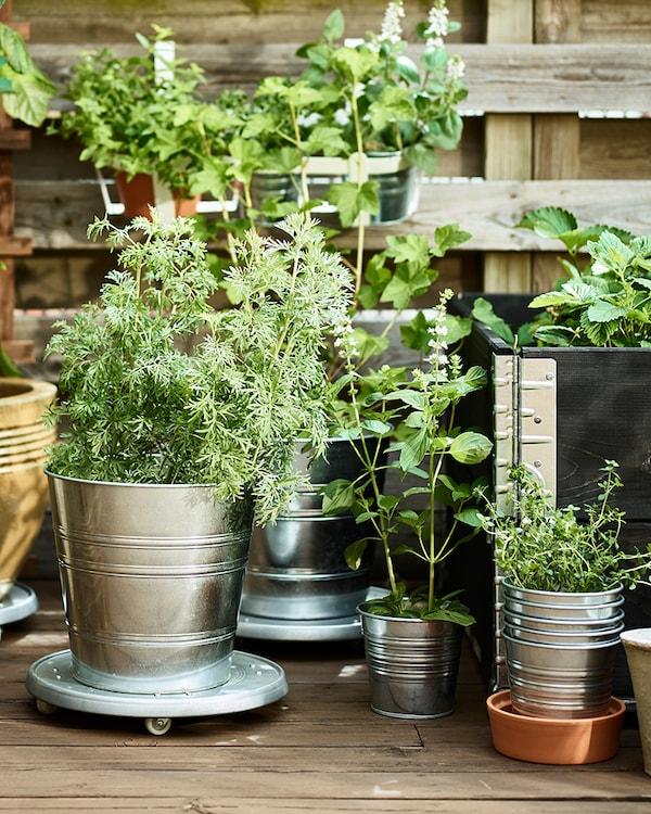 Doniczki I Rośliny Ikea