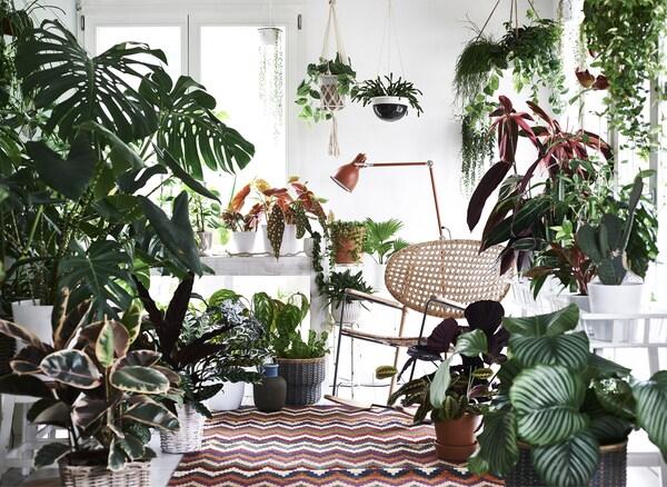Pflanzen im Wohnraum: deine Wohlfühloase - IKEA
