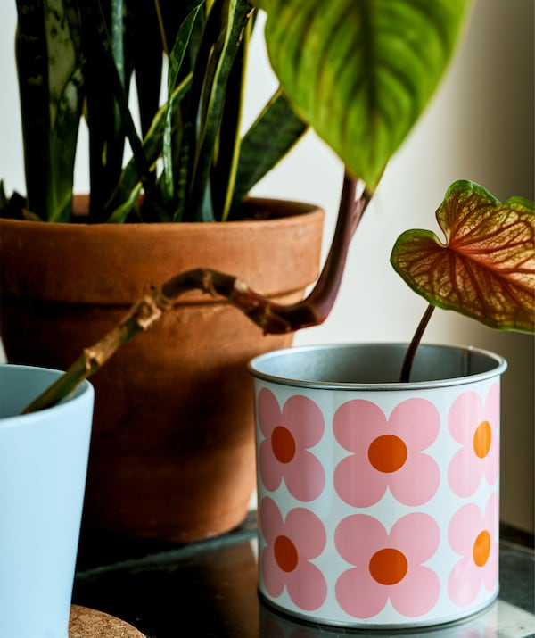 A sprouting plant in a flower print pot.