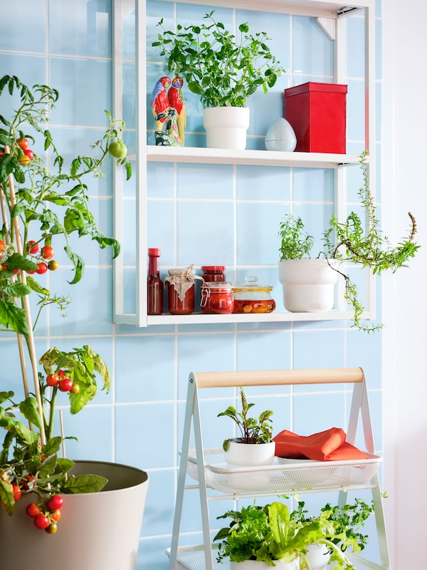 A blue-tiled space with potted plants on a white wall shelving unit, and a small, portable utility cart.