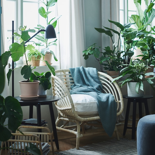A bright room with a BUSKBO armchair with a white cushion between two windows surrounded by lush green plants.