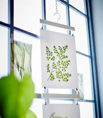 A bright window with botanical themed pictures on it.