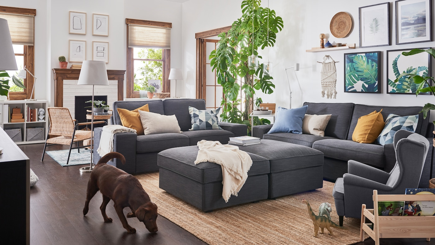 A brown dog walks past two, KIVIK two-seat sofas and two, KIVIK footstools, all anthracite colour, in a living room.
