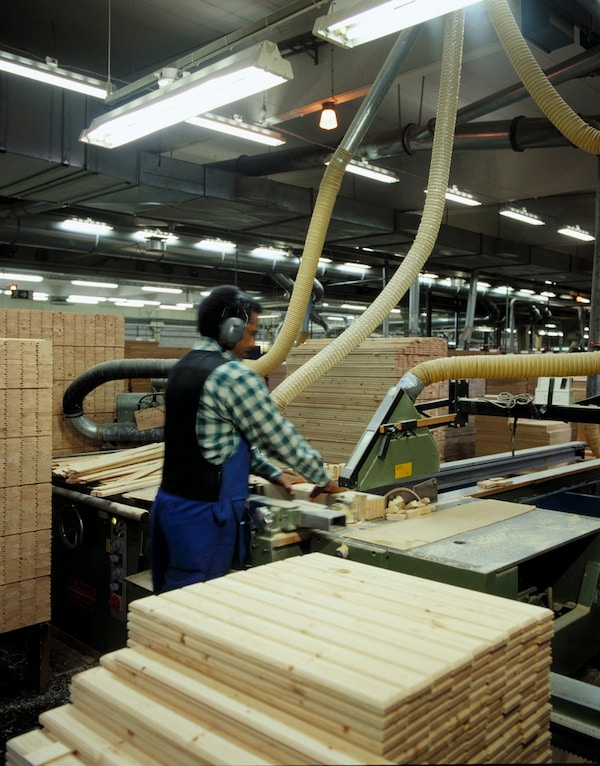 A carpenter wearing ear protection, has piles of wooden boards around him while sawing wood with a machine in a factory.