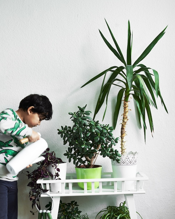 A child waters potted plants on a white plant stand.