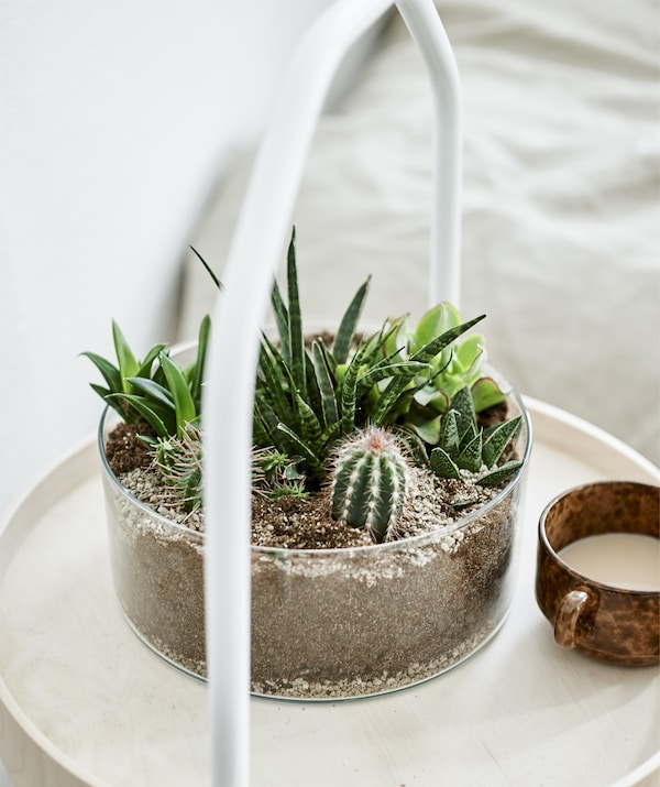 A clear, cylindrical vase containing succulents and cacti on a light wood side table.