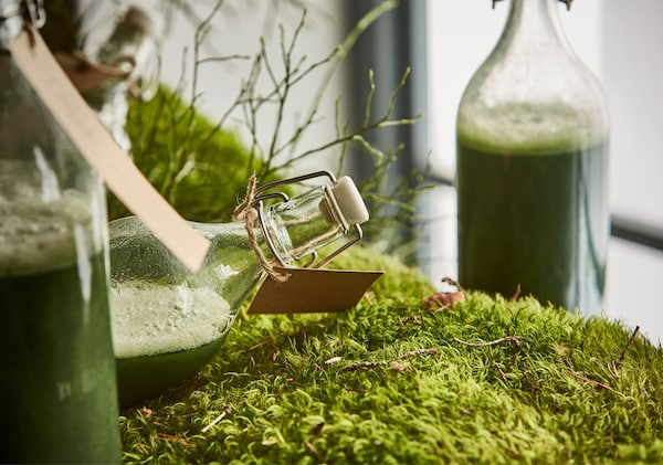 A close-up image of a bottle of green juice laying on a bed of moss.
