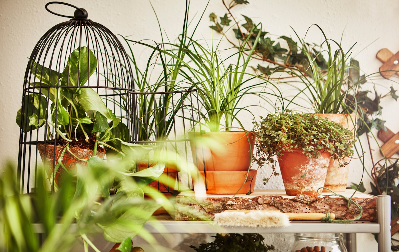 A close-up image of potted plants sitting on a shelf.