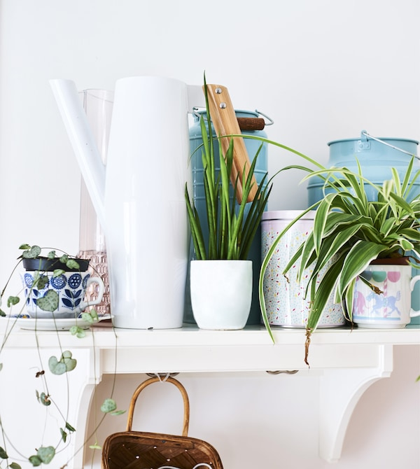 A collection of plants and jugs on a white shelf.