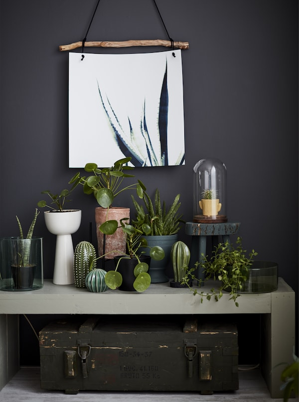 A collection of plants on a side table.