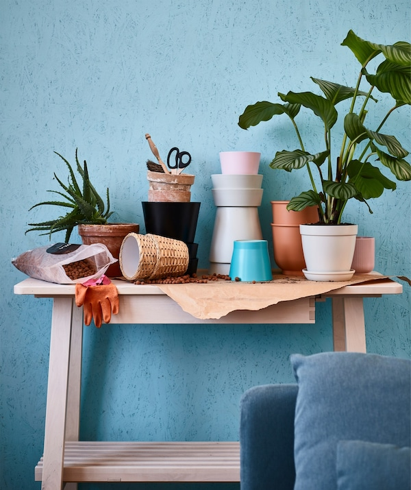 A collection of pots and plants on a table.