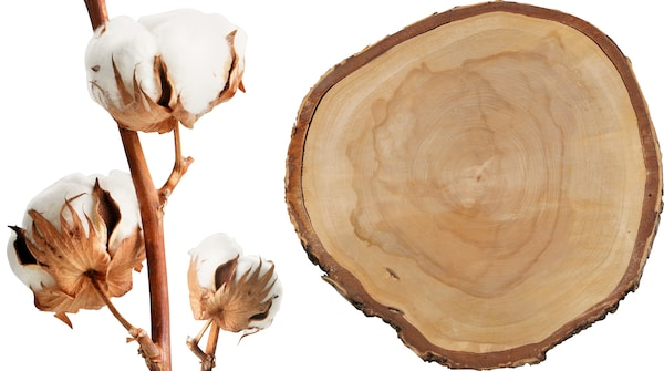 A cotton plant and a round piece of wood against a white background.