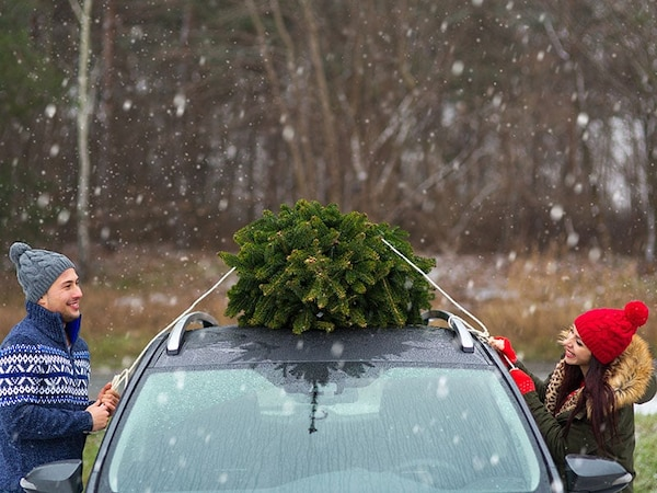 A couple tieing a tree to the roof of a car
