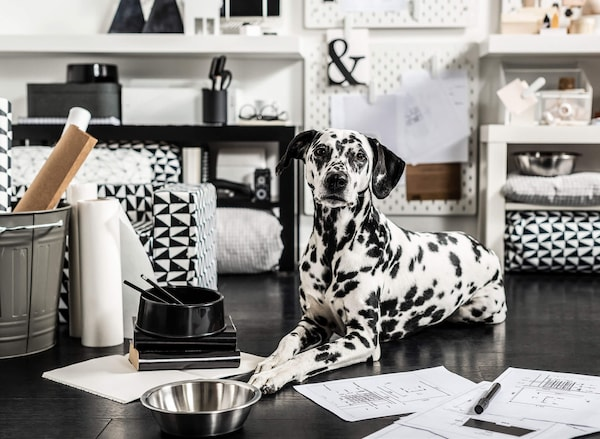 A Dalmatian lying on the ground with a metal bowl in front of it, and black and white furnishings around it.