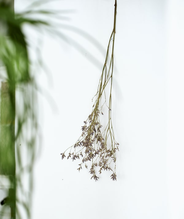 A dried flower stem hung on a white wall.