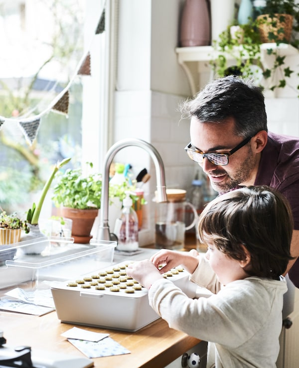 A father and son planting a sprout box in a white kitchen.