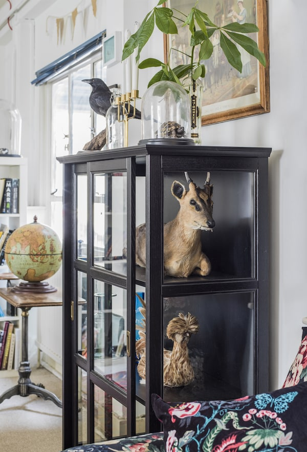 A glass display cabinet with taxidermy.