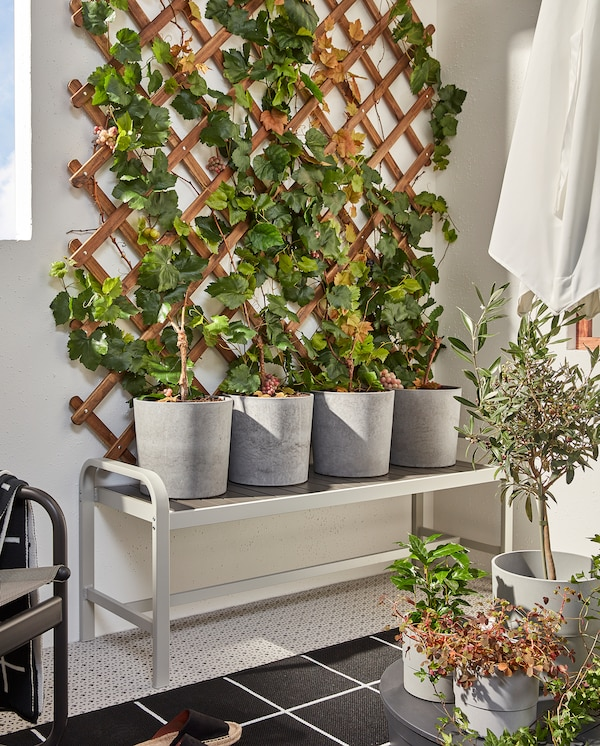 A grey/dark grey SJÄLLAND bench with four grey plant pots with green plants that grow up along a wooden trellis.