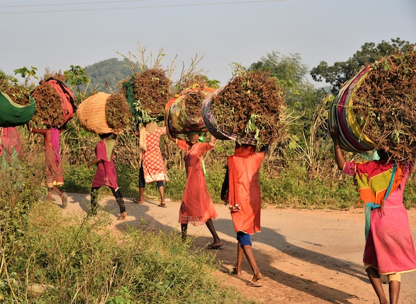 A group of African women wearing brightly coloured clothes, are carrying large bundles of plants on their heads.