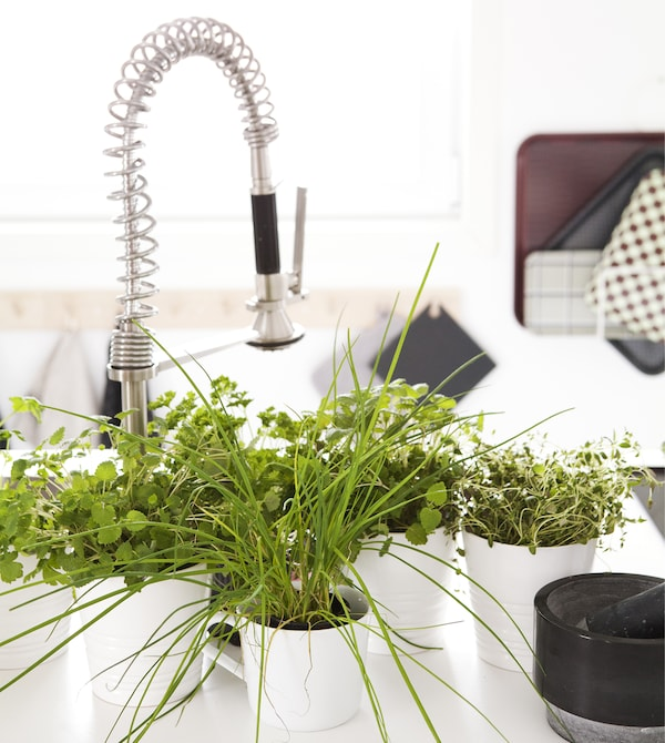 A kitchen sink area with potted herbs.