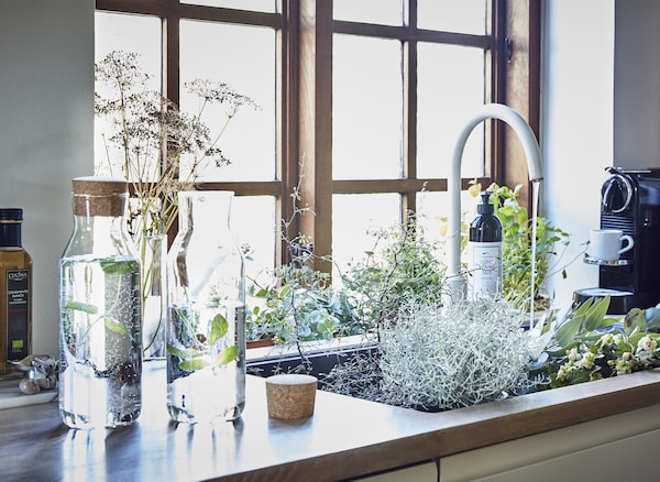 A kitchen sink filled with greenery.