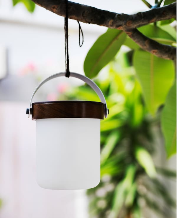 A lantern hanging from a tree branch.