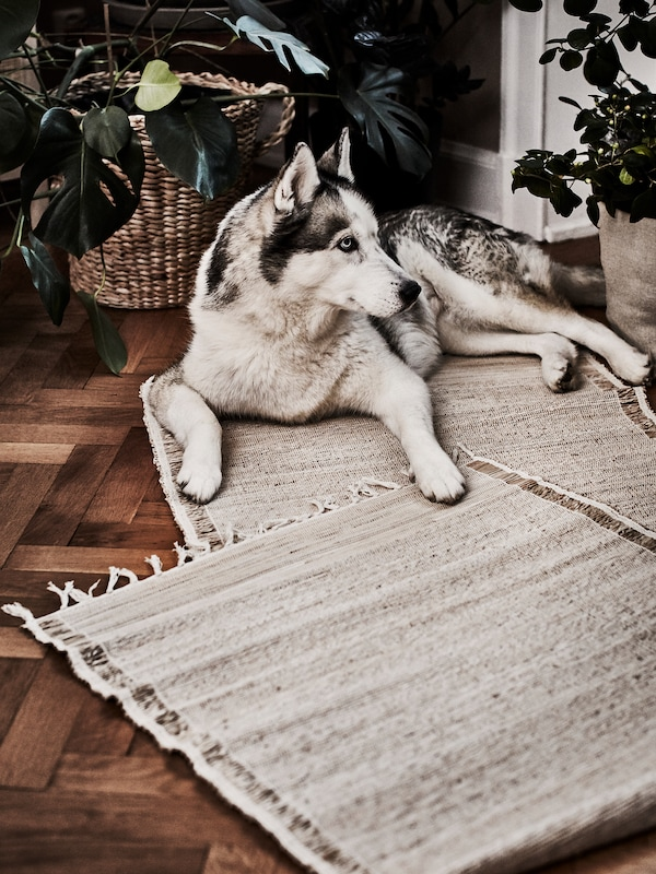 A large happy dog resting next to plants on a couple of rugs, flatwoven in natural banana fibre.