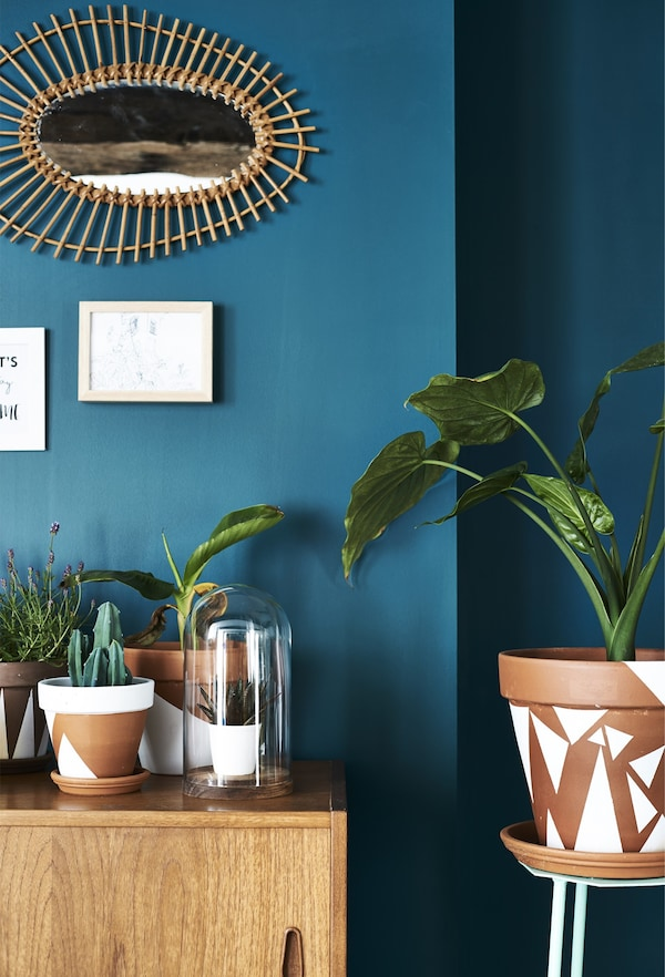 A large monstera plant in a painted terracotta pot against a bright blue wall.