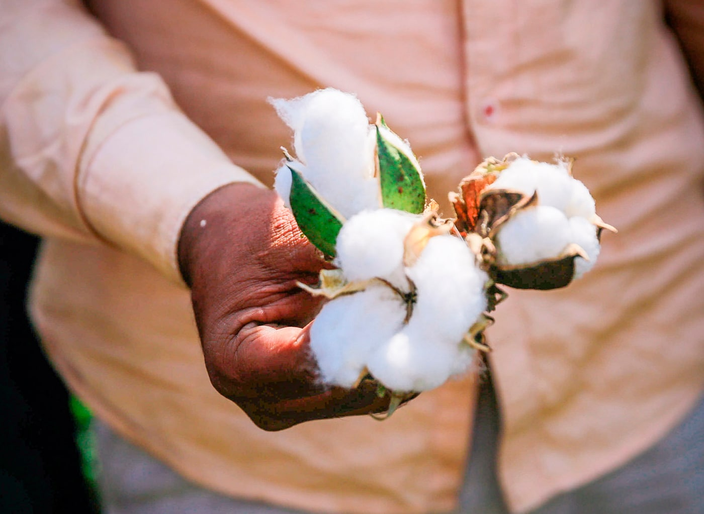 A man holding cotton from more sustainable sources in his hand.