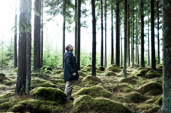 A man is standing in between trees at a tree farm. The ground is covered with moss. He is looking upwards.