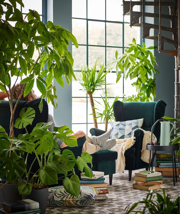 A man sitting in an armchair with his feet resting on a footstool in a living room, surrounded by plants.