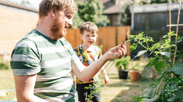 A man with a beard and a striped t-shirt shows his toddler plants in their garden.