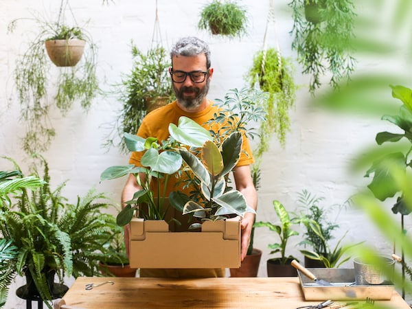 A man with a beard and glasses looks happy while holding a cardboard box of plants in an indoor space filled with plants.