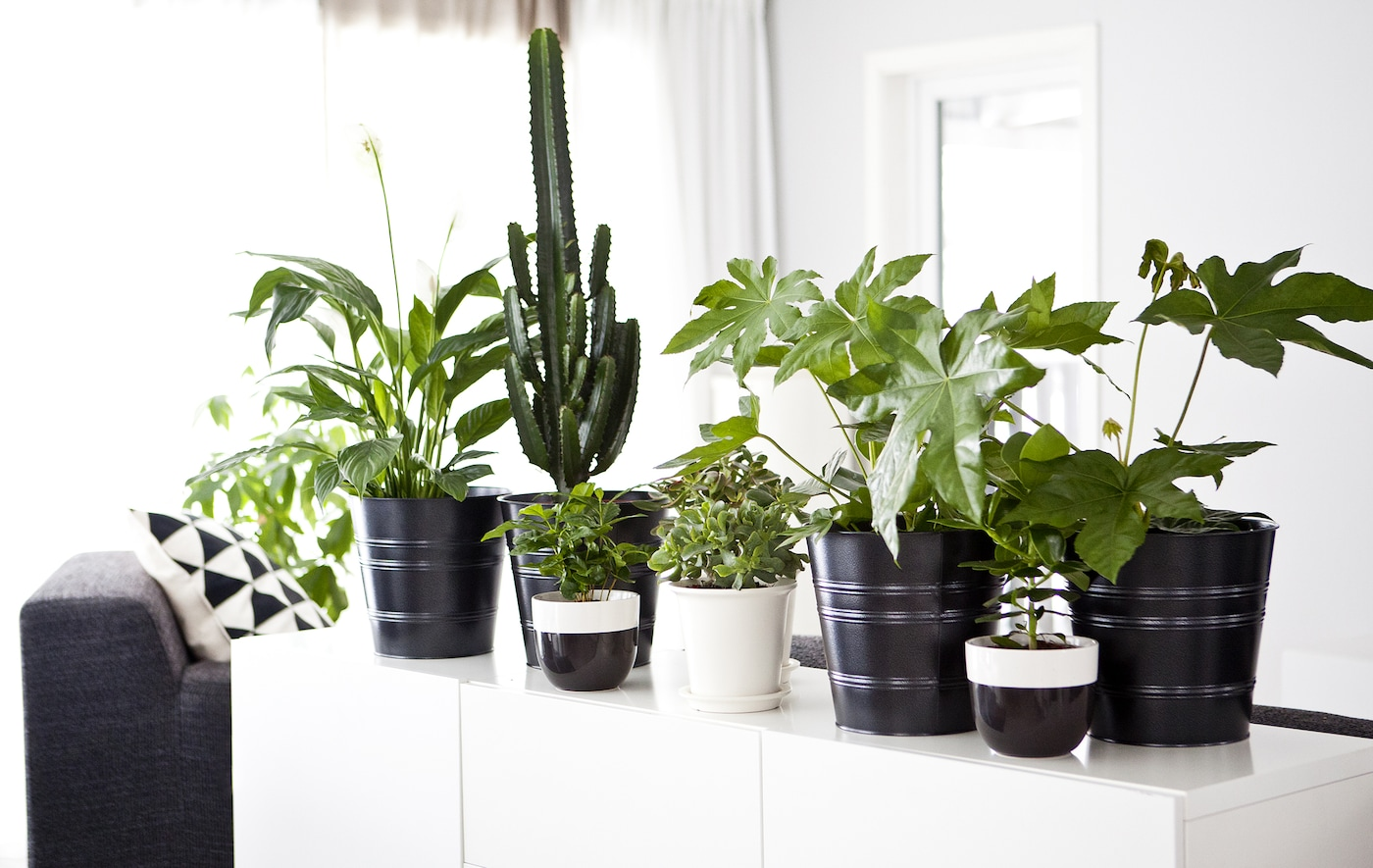 A monochrome interior with a white sideboard decorated using lots of potted green plants.