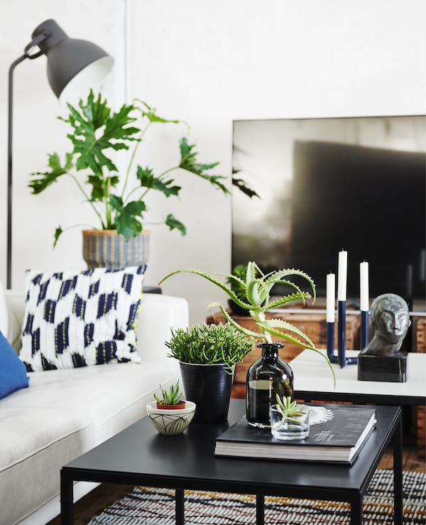 A monochrome living room with white sofa and plants on a coffee table.