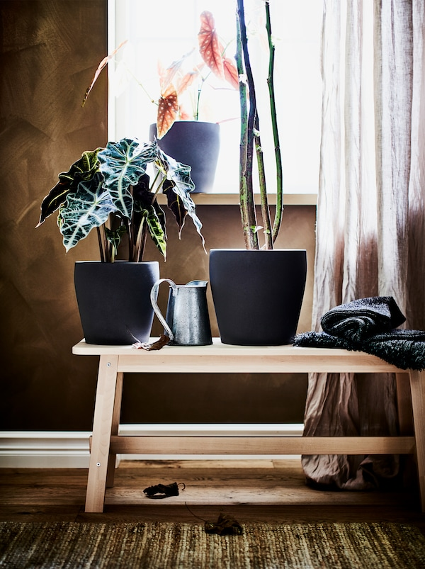 A NORRÅKER birch bench in front of a window and three large plants in black pots with the same shape but in different sizes.