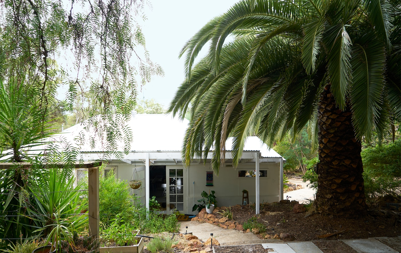 A one-storey white house among woodland, with a giant palm tree.