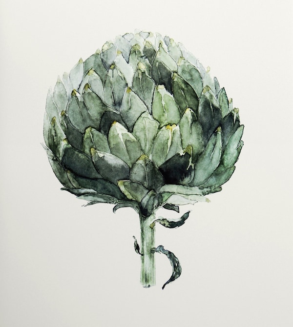 A painting of an artichoke.