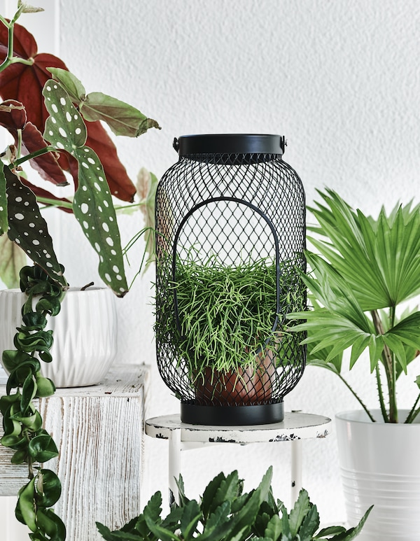 A plant inside a black lantern on a small white stool.