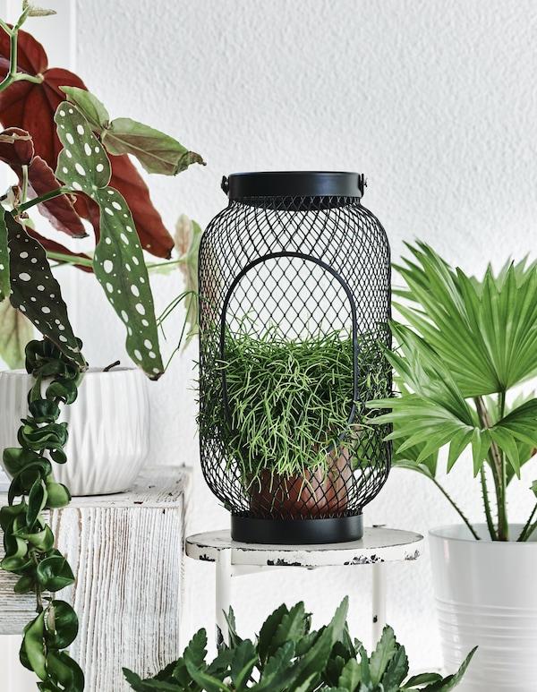 A plant inside a black lantern on a small white stool.