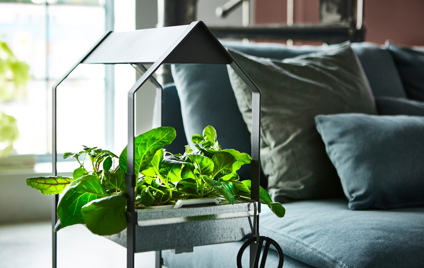 A plant stand filled with herbs and greens sits in a living room next to a sofa.