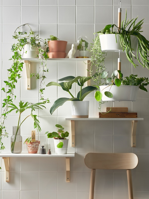 A plant wall made with three shelves on different heights and a white BITTERGURKA hanging planter filled with green plants.